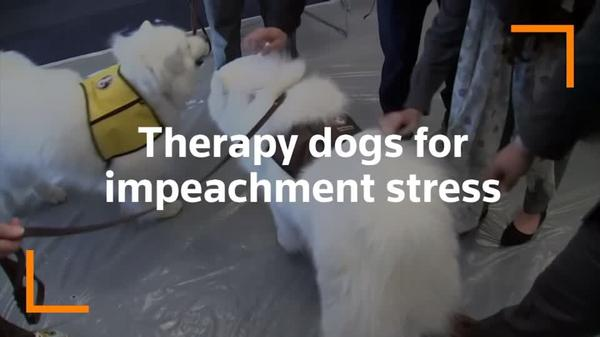 Wagging tails on Capitol Hill relieve impeachment stress