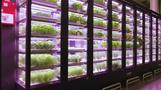 Berliner Start-Up für Gemüse erobert USA