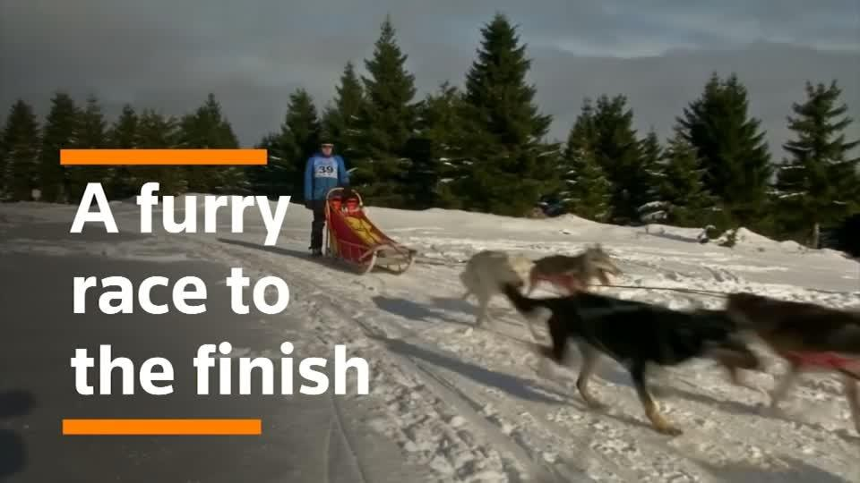 Mushing through the snow, dog sledders compete in Czech race