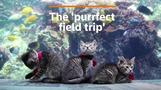 Kittens from animal shelter visit U.S. aquarium