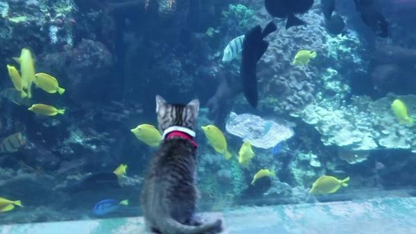 米保護施設の子ネコたち、水族館を貸し切り訪問(字幕・8日)