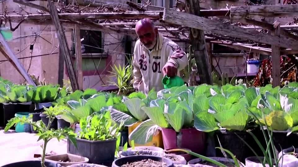 Gazan farmer uses rooftop garden to support family