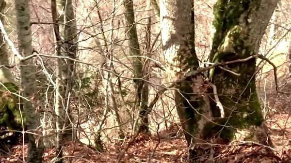 スイスで大規模な落石の実験、軌跡を予測(字幕・20日)