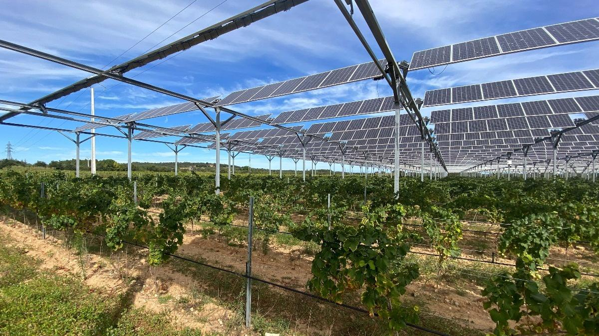 Solar panels help French winemaker fight climate change