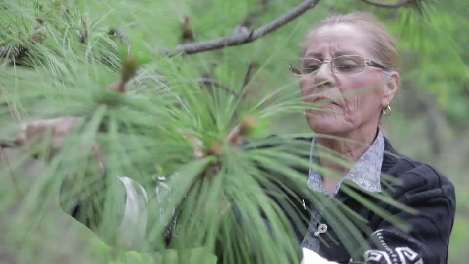 Grandmother's campaign plants over a million trees