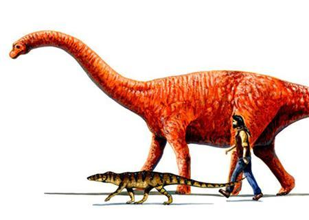 An undated image showing a prehistoric crocodile, a human and a dinosaur. With creationism now coming in Christian and Muslim versions, scientists, teachers and theologians in France are debating ways to counteract what they see as growing religious attacks on science. REUTERS/HO/File