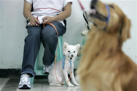 Taiwan hopes to muzzle stray dog problem in 10 years - Reuters