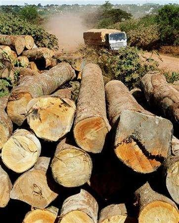 Cutting Down Rainforests Also Cuts Down on Rainfall