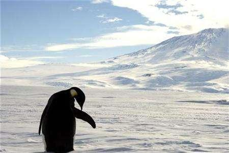 A foraging Emperor penguin preens on snow-covered sea ice around the base of the active volcano Mount Erebus, near McMurdo Station, the largest U.S. Science base in Antarctica, December 9, 2006. Antarctica lost billions of tons of ice over the last decade, contributing to the rising seas around the world, a climate researcher said on Monday. REUTERS/Deborah Zabarenko