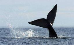 <p>Una balena s'immerge nelle acque di Puerto Piramides, in Argentina. La foto è stata scattata nel giugno 2007. REUTERS/Maximiliano Jonas</p>