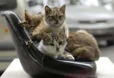 <p>Alcuni gatti si stringono l'un l'altro per scaldarsi. REUTERS/Ognen Teofilovski (MACEDONIA)</p>