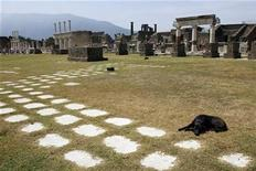 <p>A dog lies on the ground in Pompeii, the famous city next to Naples which was destroyed in AD 79 by the eruption of Mount Vesuvius July 17, 2008. REUTERS/Giampiero Sposito</p>