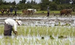 "<p>Farmers plant rice seedlings in a paddy field in Kampong Chhnang province, 91 km northwest of Phnom Penh in this September 9, 2005 file photo. Cambodia's economy was devastated by civil war from the 1970s to the late 1990s, including four years under Pol Pot's Khmer Rouge, whose dream of transforming the country into a great rice power ended in the nightmare of the ""Killing Fields"". Now another agrarian revolution is under way as the government seeks to boost rice exports and cut poverty among its 14 million people. The key is better irrigation and fertiliser. To match feature CAMBODIA-RICE/ REUTERS/Chor Sokunthea/Files</p>"