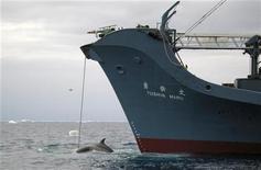 <p>Un cetaceo arpionato da una baleniera giapponese. REUTERS/Australian Customs/Handout (ANTARTICA). EDITORIAL USE ONLY. NOT FOR SALE FOR MARKETING OR ADVERTISING CAMPAIGNS.</p>
