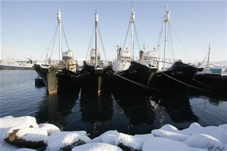 Whaling ships are seen docked at a wharf in Reikjavik January 29, 2009. REUTERS/Ints Kalnins