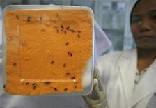 <p>A researcher displays a box containing maggots of the lucilia cuprina species of fly at the Maggot Research Laboratory at Nanyang Technologcal University in Singapore October 23, 2007. REUTERS/Vivek Prakash</p>