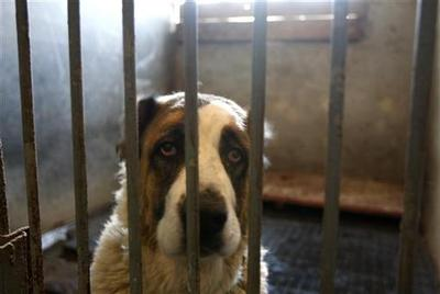 Crisis hits dogs' home