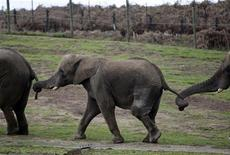 "<p>Polonia, zoo acquista elefante ""gay"", politico su tutte le furie. REUTERS/Darren Staples</p>"