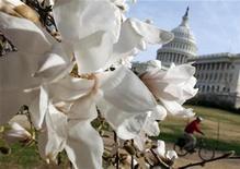 """<p>Foto de archivo de unas magnolias frente al capitolio estadounidense en Washington, 25 mar 2009. Un filme llamado """"Outrage"""" inició un debate sobre si los políticos en Estados Unidos que viven en secreto la homosexualidad y votan contra los intereses de gays y lesbianas deberían ser """"expuestos"""", dado que su hipocresía demora los avances en derechos de sus pares. REUTERS/Jim Young</p>"""