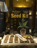 <p>Семена различных сортов каннабиса в кофе-шопе в Роттердаме 28 ноября 2008 года. Экстракт конопли может применяться при лечении таких заболеваний как рак, диабет и шизофрения, сообщает фармацевтическая компания GW Pharma, специализирующаяся на производстве лекарств на основе конопли и других растений. REUTERS/Jerry Lampen</p>