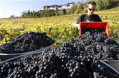 <p>Winegrower Christian Humm loads fresh-cut grapes into steel barrels for transport in a vineyard of Swiss wine maker Zweifel during sunny autumn weather near the village of Regensberg west of Zurich October 20, 2008. REUTERS/Arnd Wiegmann</p>