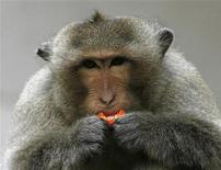 <p>A macaque monkey eats a candy in the town of Lopburi, 155 km (96 miles) north of Bangkok, August 19, 2009. REUTERS/Chaiwat Subprasom</p>
