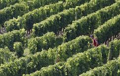 <p>A man runs in the vineyards near Castillon la Bataille, August 4, 2009. REUTERS/Regis Duvignau</p>
