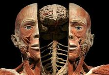 <p>A plastinated human specimen is shown during the media preview of the Koerperwelten ('Body Worlds') exhibition in Zurich September 10, 2009. REUTERS/Arnd Wiegmann</p>