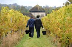 <p>Grape pickers walk between the vines as they take a break at the Denbies Wine Estate in Dorking, southern England, October 22, 2009. REUTERS/Jas Lehal</p>