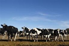 """<p>Foto de archivo de unas vacas Holland en una granja en Navarro, Argentina, jun 17 2009. Científicos argentinos presentaron el martes una leche de vaca y cabra que previene el desarrollo de tumores y enfermedades degenerativas, calificada como """"súperleche"""" por sus propiedades benéficas. REUTERS/Enrique Marcarian</p>"""