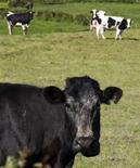 <p>Mucche al pascolo. REUTERS/Nigel Marple</p>
