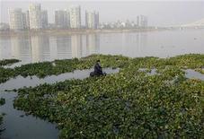 <p>A worker clears water hyacinths in Yaojiang River in Ningbo, Zhejiang province November 25, 2009. REUTERS/Steven Shi</p>