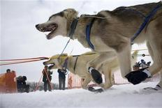 <p>Sonny Lindner's team races out of the chute during the official restart of the Iditarod Race in Willow Alaska March 8, 2009 file photo. REUTERS/Nathaniel Wilder</p>