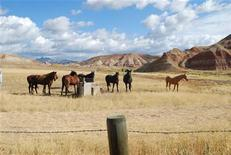 <p>Horses graze beside Route 26 in western Wyoming, September 26, 2009. REUTERS/Jon Hurdle</p>