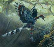 <p>An artist rendering of the earliest fossil bird Archaeopteryx. REUTERS/Todd Marshal/Handout</p>