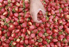 <p>Un uomo prende delle fragole da una bancarella in un mercato. REUTERS/Faisal Mahmood</p>