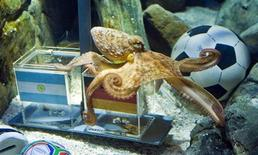 """<p>A two year-old octopus Paul, the so-called """"octopus oracle"""" predicts Germany's victory in their 2010 World Cup quarter-final soccer match against Argentina by choosing a mussel, from a glass box with the German flag instead of a glass box with the Argentinian flag, at the Sea Life Aquarium in the western German city of Oberhausen June 29, 2010. Paul has so far rightly predicted Germany's first and second round victories over Ghana, Australia and England plus Germany's defeat against Serbia. REUTERS/Kirsten Neumann</p>"""