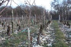 <p>Undated image shows the rocky soils of Sancerre, a top area for sauvignon blanc in France's Loire Valley. REUTERS/Edward Deitch</p>