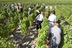 <p>Pickers work at the Chateau Haut Brion vineyard in France's Bordeaux region in Pessac, southwestern France, August 31, 2009. REUTERS/Olivier Pon</p>