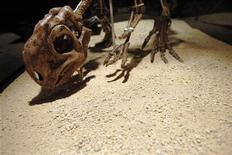 <p>Скелет динозавра на выставке в городе Алькобендас, недалеко от Мадрида, 17 марта 2010 года. Первые динозавры были крошечными животными и передвигались на четырех конечностях, свидетельствуют следы, обнаруженные учеными в Польше. REUTERS/Juan Medina</p>