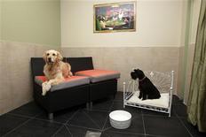 """<p>A Vincennes, dans une chambre d'""""Actuel Dogs"""", qui se présente comme le premier hôtel de luxe pour chiens en France. Cet établissement de la banlieue parisienne est doté de piscines chauffées, de salons de massage et ses fondateurs Devi et Stan Burun proposent des menus à la carte, des cours d'éducation canine, des garderies pour des séjours courts ou longs et des promenades dans le bois tout proche. /Photo prise le 24 février 2011/REUTERS/Jacky Naegelen</p>"""
