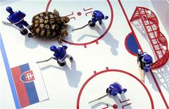 <p>Черепаха Магдалена предсказывает результат матча чемпионата мира по хоккею Словакия-Словения в Жилине 28 апреля 2011 года. Стартующий на этой неделе в Словакии чемпионат мира по хоккею обзавелся вслед за прошлогодним футбольным Мундиалем своим собственным оракулом - двухголовой черепахой Магдаленой. REUTERS/Radovan Stoklasa</p>