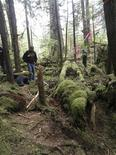 <p>A moss-covered unfinished Indian canoe (R), discovered in a remote section of southeast Alaska rain forest, is shown in this undated handout released to Reuters July 13, 2011. REUTERS/Sarah Dybdahl/Sealaska Heritage Institute/Handout</p>