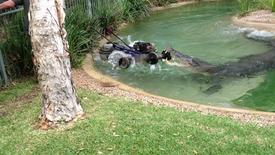 <p>Elvis the crocodile attacks a lawnmower at the Australian Reptile Park in Gosford, north of Sydney, in this still image taken from video December 28, 2011. Two workers at a reptile park near Sydney ran for their lives on Wednesday when a 500 kg crocodile named Elvis suddenly lunged at them, making off with their lawnmower. REUTERS/Australian Reptile Park/Handout</p>
