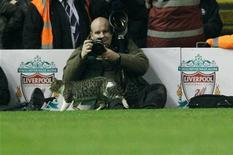 <p>A cat walks on the pitch during the English Premier League soccer match between Liverpool and Tottenham Hotspur at Anfield in Liverpool, northern England February 6, 2012. REUTERS/Phil Noble</p>