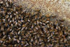 <p>Une douzaine d'apiculteurs du Haut-Rhin ont récolté cet été un miel aux couleurs inhabituellement bleutées provenant des déchets de bonbons de la même couleur. Les butineuses délaissaient les fleurs des prés de Ribeauvillé au profit des sucreries entreposées par une unité de méthanisation mise en service au début de l'année par trois agriculteurs. /Photo d'archives/REUTERS/Amir Cohen</p>