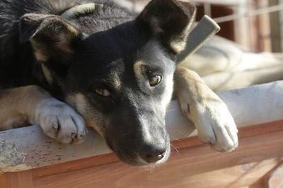 Sochi's stray dogs