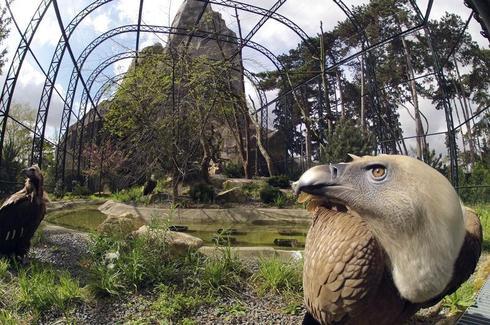 The new Paris Zoo
