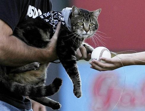 Hero cat's first pitch