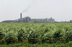 FOTO DE ARCHIVO: El ingenio azucarero de  Florida Crystals Corp. aparece atrás de un campo de caña en Okeelanta, Florida. 9 de julio, 2008. El Gobierno de Estados Unidos anunció el viernes que incrementó sus cuotas de importación de azúcar de caña y remolacha en unas  650.000 toneladas cortas para la actual temporada, en medio de señales de una oferta doméstica que mengua. REUTERS/Joe Skipper